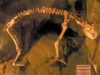 Grotte Toirano - particolari