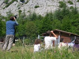 Area Faunistica Camoscio d'Abruzzo (Lama dei peligni)